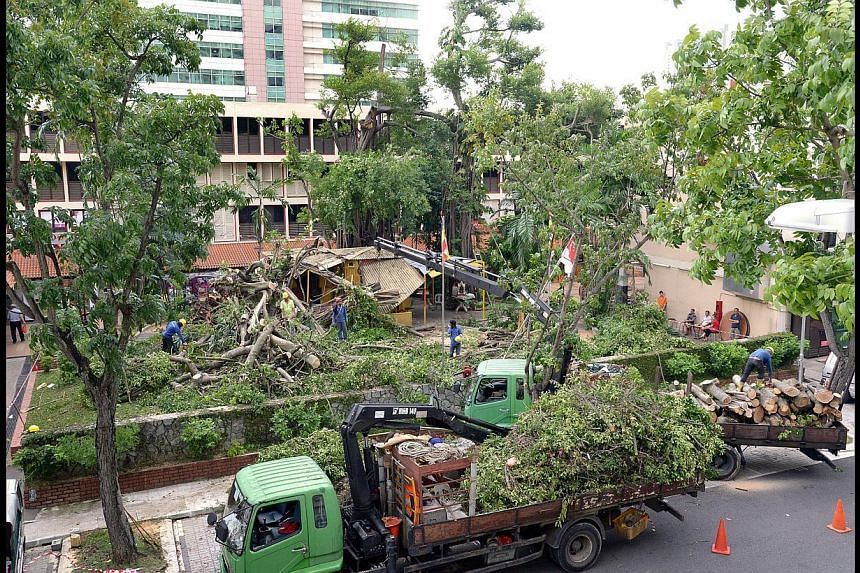 Workers clearing away the remains of the ficus tree in Toa Payoh Central that fell during a storm last week. Regarded by believers as a ''shen shu'' - or ''god tree'' in Mandarin - the tree was said to be more than a century old. For four decades, de