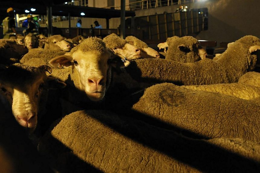 All 2,000 Australian sheep offered for this year's korban rites at 16 mosques have been taken up by members of the public. -- ST FILE PHOTO:MUGILAN RAJASEGERAN