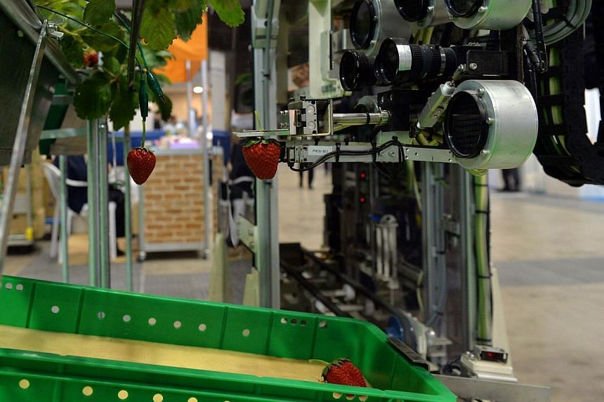 Japan's agriculture machinery maker Shibuya Seiki and National Agriculture and Food Research Organisation displays a robot picking a ripe strawberry for a demonstration at the annual autoID and communication expo in Tokyo on Wednesday, Sept 25, 2013.