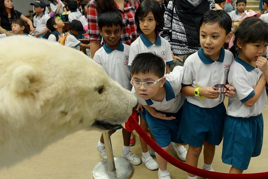Primary 1 pupils from Qifa Primary School look at Sheba the polar bear, which has been stuffed and is now used for educational talks at the Singapore Zoo. See more pictures from around the world in Through The Lens' Today in Pictures. -- ST PHOTO:&nb