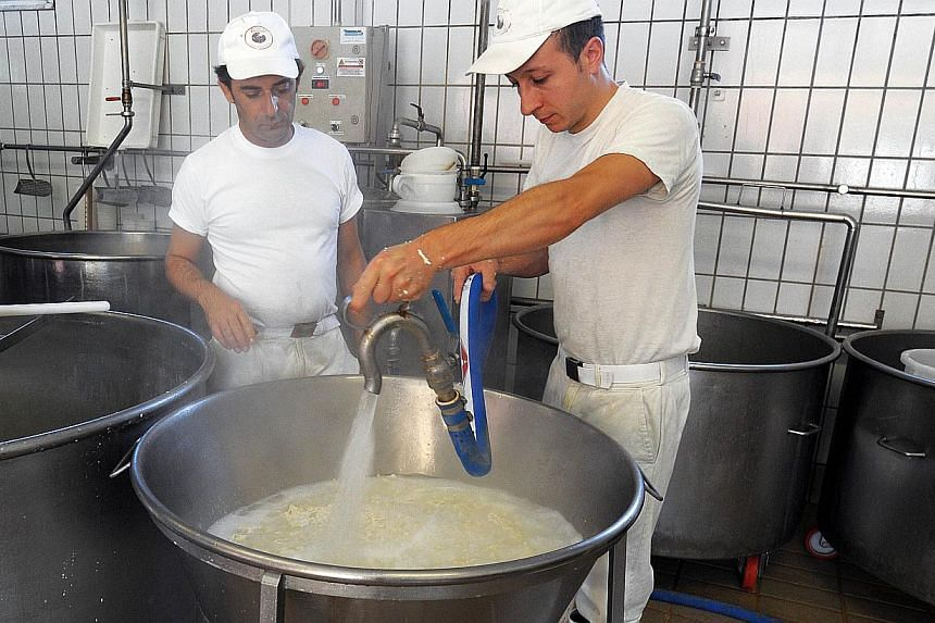 Employees make buffalo mozzarella at the Tenuta Vannulo dairy farm in Capaccio on Sept 3, 2013. Half-tonne black water buffaloes at Tenuta Vannulo spend their days lounging on rubber mattresses, munching on organic hay or looking forward to vaporised