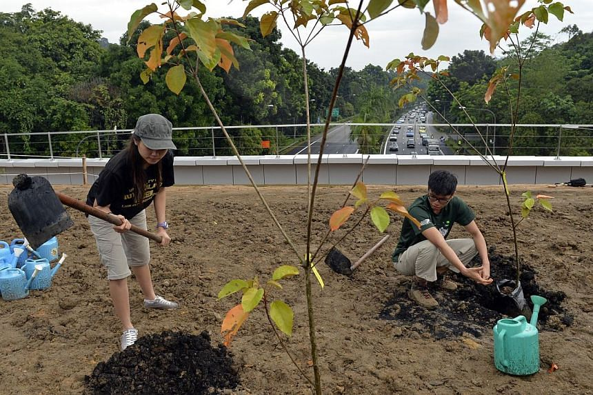 NParks volunteers Triffany Yeo Zhi Xiang (left), 23, and Koh Tiang Lip, 20, plant trees. -- ST PHOTO: DESMOND FOO