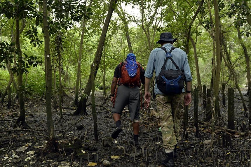 Researchers N. Sivasothi (left) and Dan Friess at the Mandai mangrove site, which has been zoned as a reserve site - which means it could be subject to future development. Some feel the area needs formal management to conserve it.