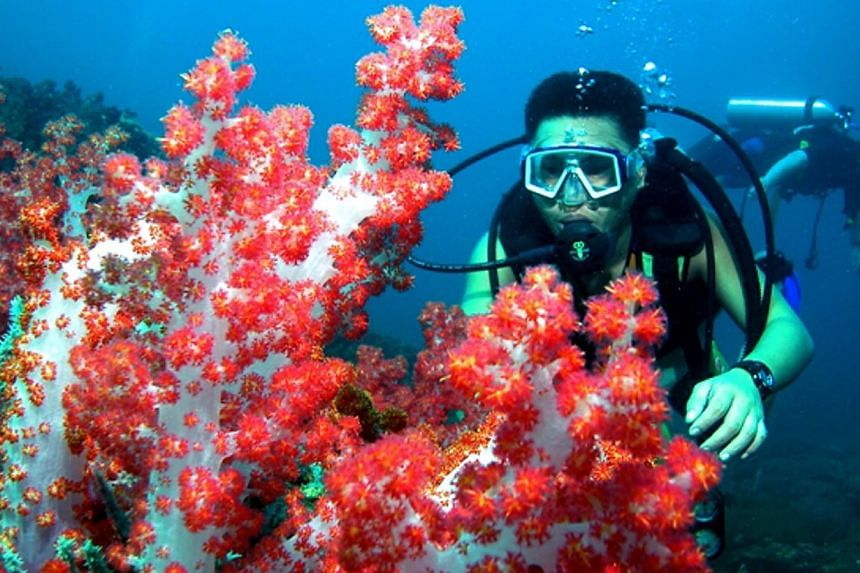 Diving in the deep sea waters of Miri, Sarawak. The World Bank has decided to approve a multimillion-dollar project that will come up with clever models to put a value on coral reefs and their related ecosystems that governments can understand and us