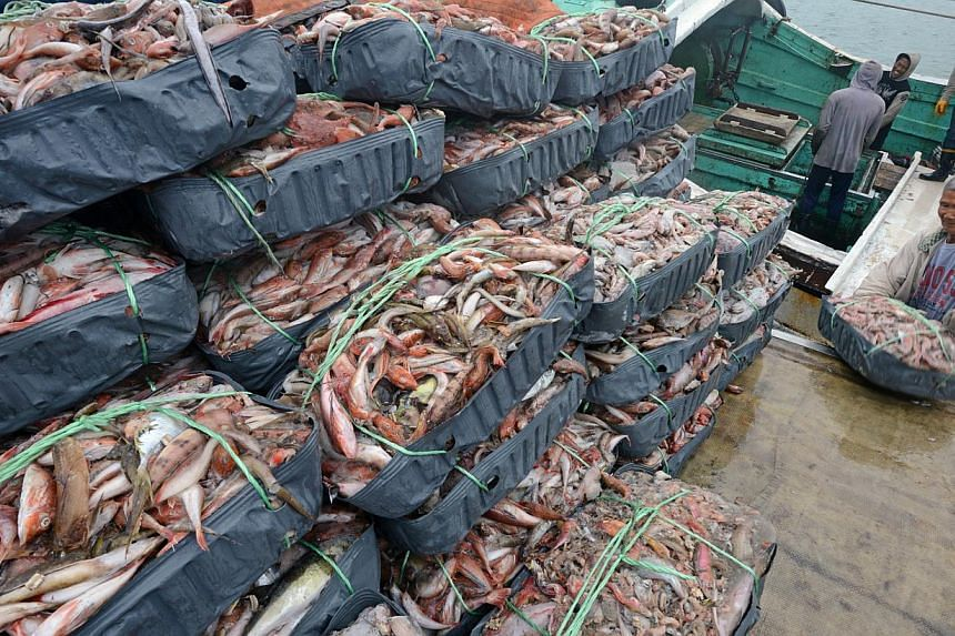 Foreign fish workers load the catches at the Patoutze fish harbor, in Keelung, northern Taiwan on Oct 5, 2013. -- FILE PHOTO: AFP