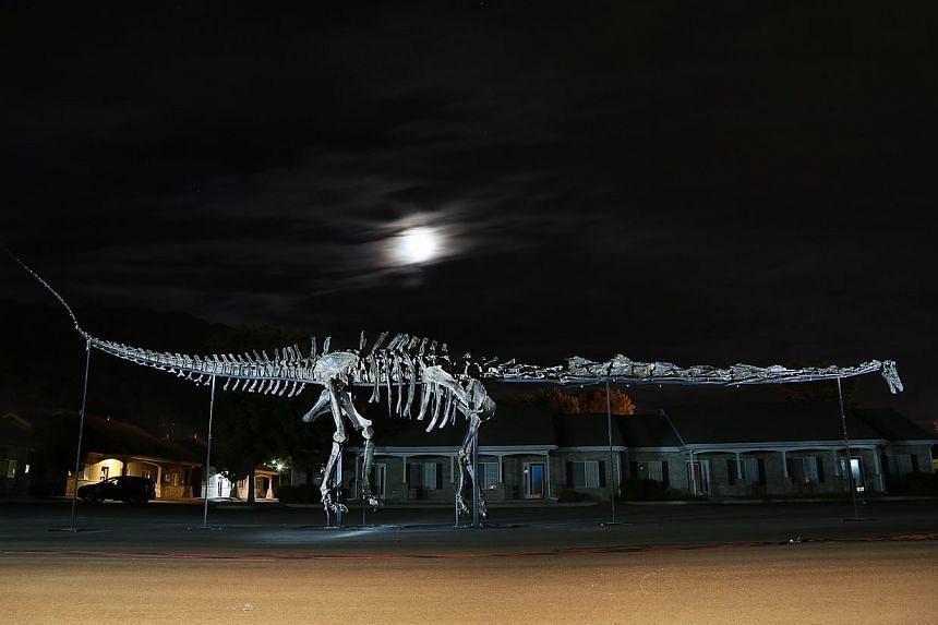 Prince, one of the three sauropod dinosaurs discovered in Wyoming, arrived in Singapore on Oct 9, 2013. The skeletons of Prince, Apollo and Twinky are set to become star draws at the Republic's first dedicated natural history museum. -- PHOTOS: RAFFL
