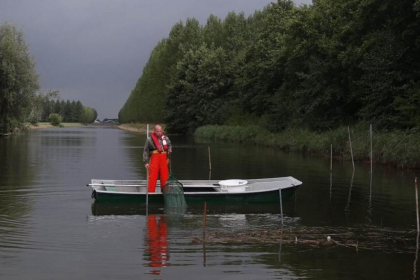 "Dutch fisherman Aart van der Waal pulls up an eel trap on a small canal at Nieuwendijk on Sept 18, 2013 at the start of the ""Eels over the Dike"" project. -- FILE PHOTO: AFP"