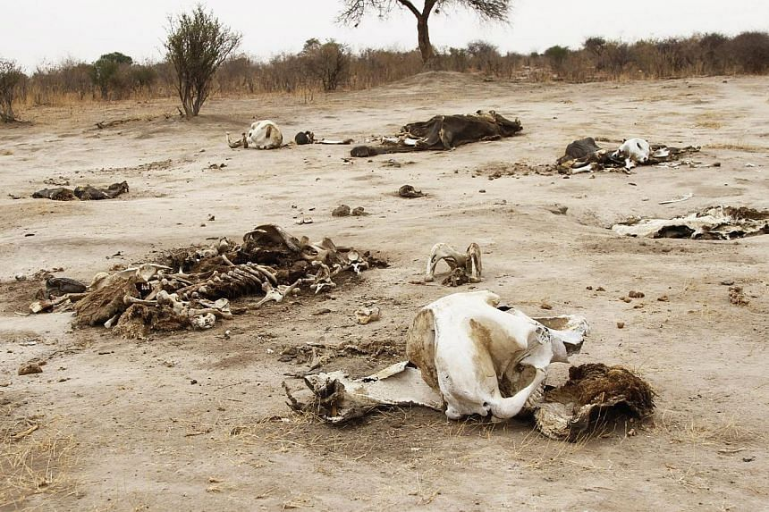 Rotting elephant carcasses in Hwange National Park on Sunday, Sept 29, 2013. Zimbabwean wildlife authorities said on Tuesday they had discovered another 10 elephant carcasses, bringing the number of the animals poisoned by cyanide for their ivo