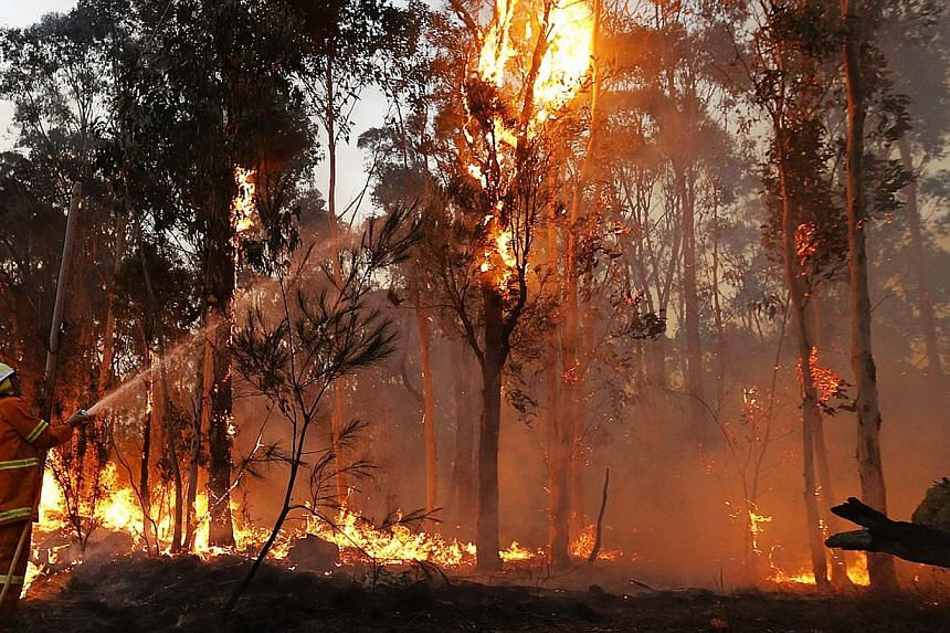 """A firefighter attempts to extinguish a bushfire in Castlereagh, near Sydney on Sept 10, 2013. Residents faced scenes of devastation on Friday after bushfires ravaged communities and destroyed """"hundreds"""" of homes in south-eastern Australia, leaving on"""