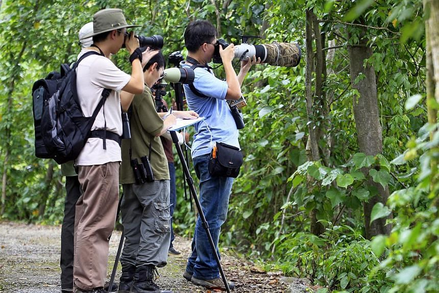 Participants embark on the trail of spotting as many birds as they can during the 24-hour 30th Big Bird Race organised by the Nature Society, which kicked off at the Sungei Buloh Wetland Reserve on Oct 19 2013. -- ST PHOTO : KEVIN LIM