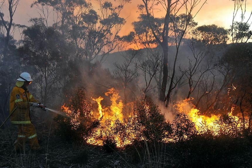A New South Wales Rural Fire Service volunteer puts out a fire in the town of Bell, Australia, on Sunday, Oct. 20, 2013.Firefighters were racing to tame an enormous blaze in south-eastern Australia on Monday with officials warning it could merg