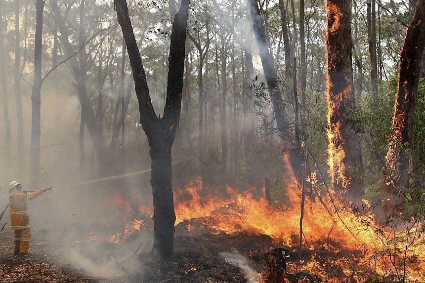 A firefighter hoses up high in the trees to control flames near houses at Bilpin, 75km west of Sydney in Australia, on Tuesday, Oct 22, 2013. -- PHOTO: AP