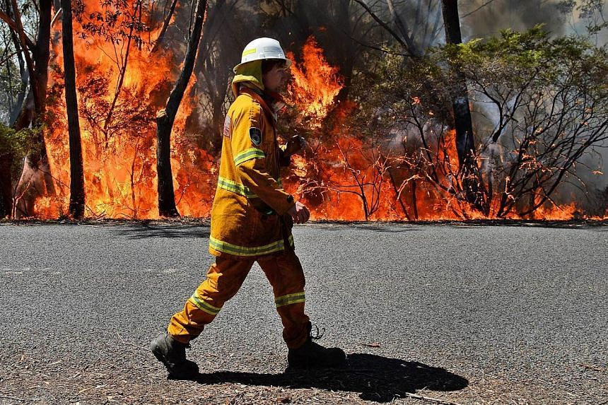 """A firefighter monitors a back burn near Mount Victoria in the Blue Mountains on Oct 21, 2013, as volunteer fire brigades race to tame an enormous blaze, with officials warning it could merge with others to create a """"mega-fire"""" if weather conditions w"""