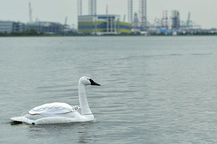 The decoy swan can float around testing water quality, transmit findings wirelessly, return on its own to a charging dock and even call for help if it is nicked.  Lead researcher Mandar Chitre (left) and research associate Koay Teong Beng say the swa