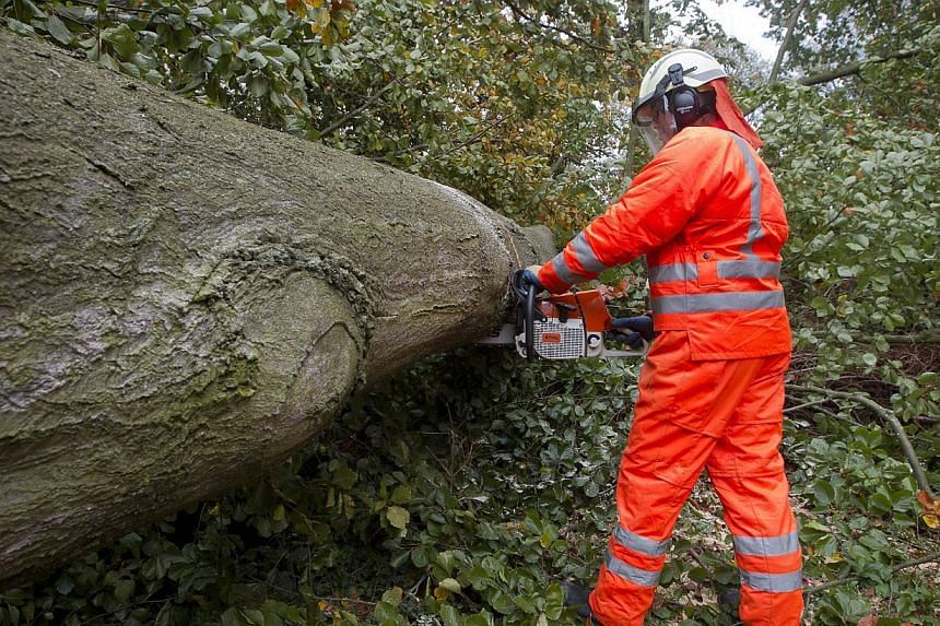A Belgian firefighter removes a tree at the Terheidedreef after it fell and blocked a road following a heavy storm in Schoten on Oct 28, 2013. -- PHOTO: AFP