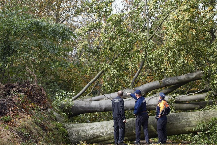 Belgian policemen inspect the site where trees fell and blocked a road following a heavy storm in Schoten on Oct 28, 2013. -- PHOTO: AFP