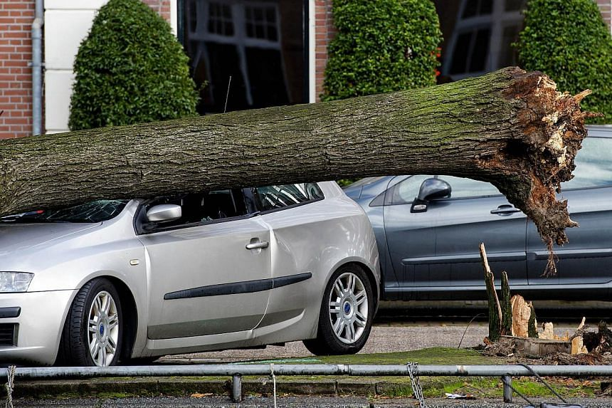 A picture shows an uprooted tree that fell on a car at the Ruysdaelkade canal in Amsterdam following a heavy storm on Oct 28, 2013.At least 11 people were killed on Monday as a fierce storm tore across northern Europe, causing mass disruption t
