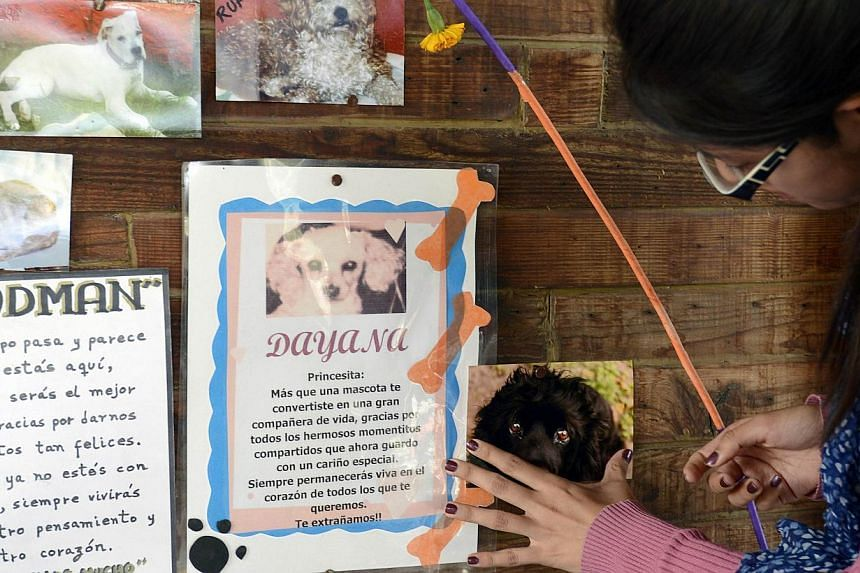 Alejandra del Castillo pastes a picture of her dog at the pet cemetery in Corregidora, State of Queretaro, Mexico on Nov 2, 2013 during the commemoration of the Day of the Dead. -- PHOTO: AFP
