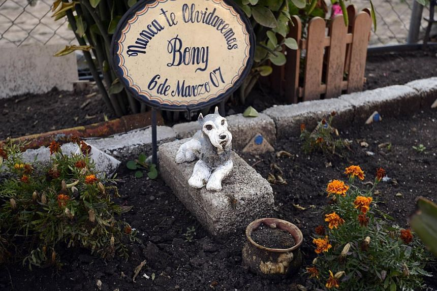 View of a grave at the pet cemetery in Corregidora, State of Queretaro, Mexico on Nov 1, 2013, a day before the commemoration of the Day of the Dead. -- PHOTO : AFP