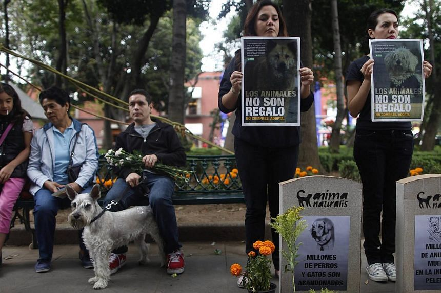 Activists from the animal rights group AnimaNaturalis hold posters next to fake headstones during a demonstration against the death of animals induced by human behavior and mishandlings in the pet industry on the Day of the Dead in Mexico City on Nov