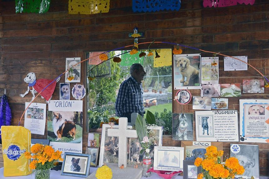 View of offering to pets at the pet cemetery in Corregidora, State of Queretaro, Mexico on Nov 2, 2013 during the commemoration of the Day of the Dead.  -- PHOTO: AFP