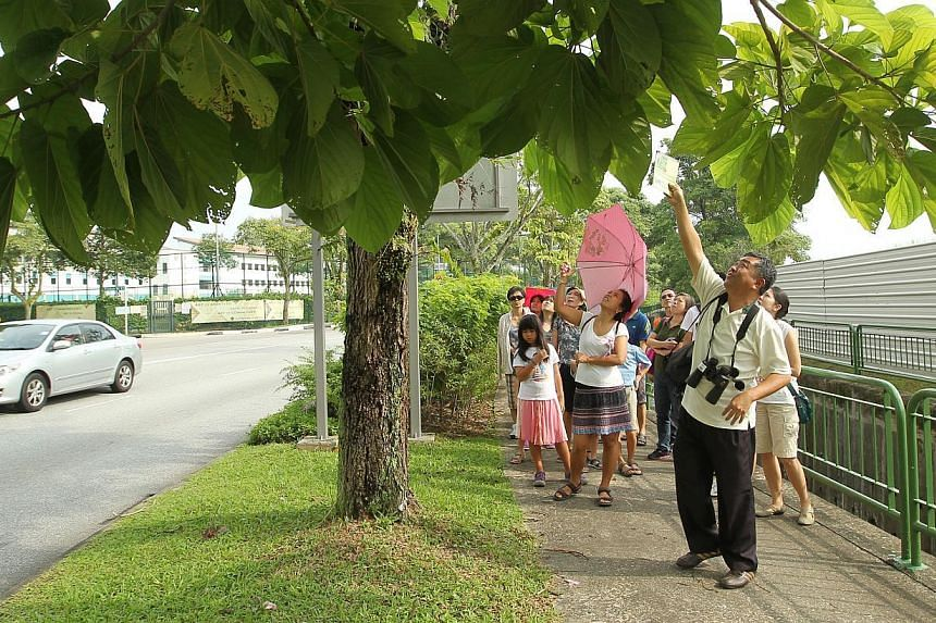 Mr Tan Swee Kwang, 52 (senior manager of NParks Streetscape division) brings participants on a tour of the Nature Way at Yishun Avenue 4, where roadside trees and shrubs are planted to help animals such as birds and butterflies move from one green ar