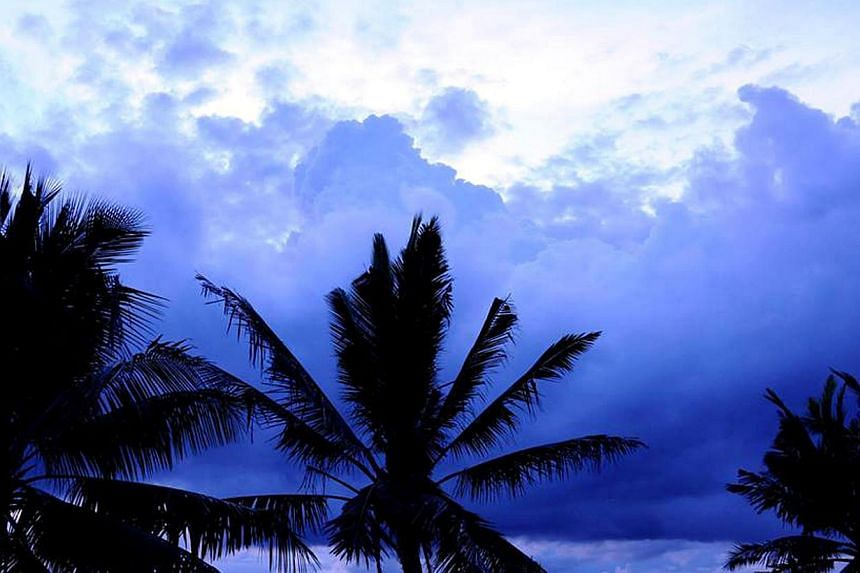Coconut trees on the Gulf of Thailand. The coconut palm is without question a symbol of the tropics in general, and also Asia's signature tree. But coconut growing countries in the Asia Pacific zone, which stretches from Fiji and Samoa in the Pacif
