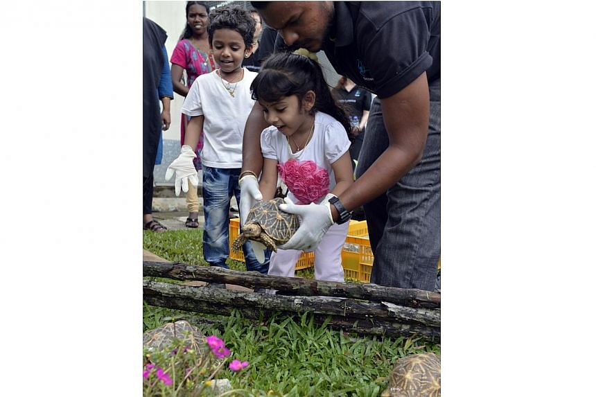 Acres head of Animal Care Kalaivanan Balakrishnan, 27, and his children, Tharini (centre) and Tharun, release a tortoise into a new enclosure at the Acres Wildlife Rescue Centre, on Thursday, Nov 14, 2013. -- ST PHOTO: DESMOND FOO