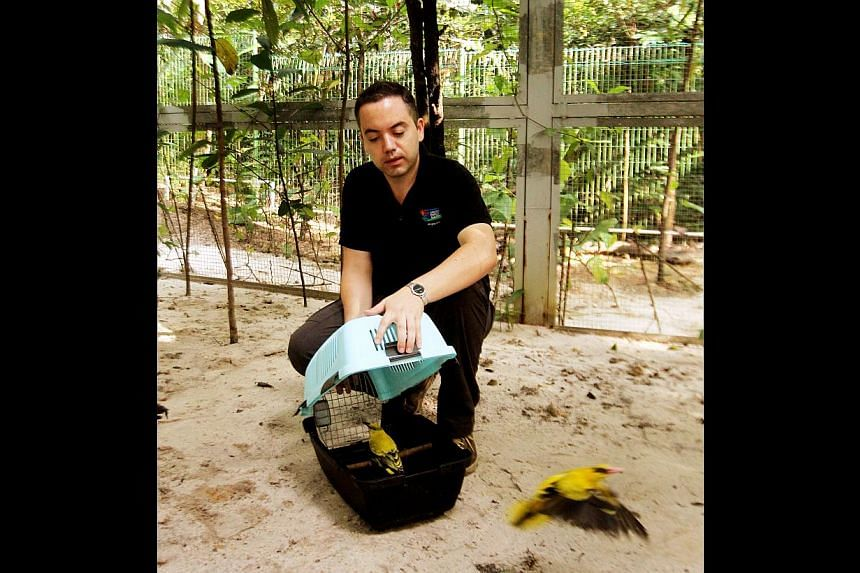 Jurong Bird Park's Dr Luis Neves, assistant director of the avian department, with some of his feathered charges. The park will mark the inaugural Native Birds' Day during a two-day festival next weekend.