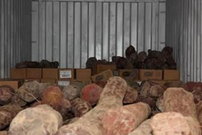 The Agri-Food and Veterinary Authority and Singapore Customs conducted a series of operations over the past two weeks to stop the shipment of $5 million worth of red sandalwood - an endangered species. -- PHOTO: AVA/ SINGAPORE CUSTOMS