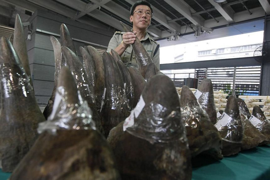Ports and Maritime Command acting head Lam Tak-fai shows smuggled rhino horns at the Hong Kong Customs and Excise Department in Hong Kong on Nov 15, 2011. Hong Kong returned a consignment of seized rhino horns and elephant tusks worth S$2.25 million