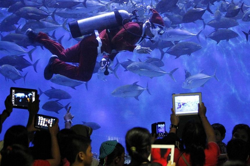 Visitors take pictures of a professional diver wearing a Santa Claus suit inside a giant aquarium as part of Christmas celebrations at the Manila Ocean Park on Thursday, Nov 28, 2013. See more pictures from around the world in Through The Lens' Today