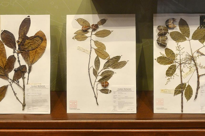 """Old plant specimens at the new Singapore Botanic Gardens Heritage Museum.  The new CDL Green Gallery uses solar panels to power all of its needs. """"Hempcrete"""", a building material made largely from the hemp plant, is used in its construction."""
