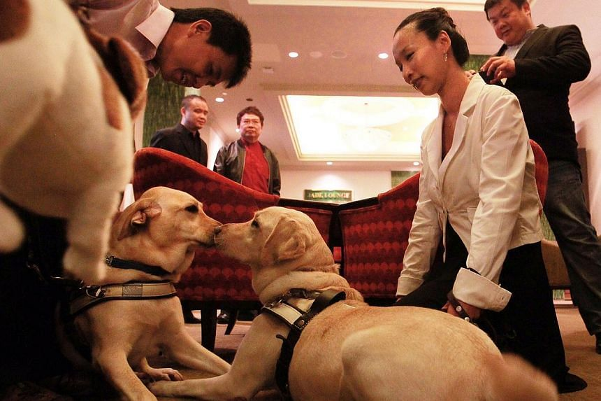 Mr Alvin Ng (left) and his guide dog Seretta meeting guide dog Esme and its owner Cassandra Chiu (in white) before the Gratitude in Darkness dinner at River View Hotel last night.