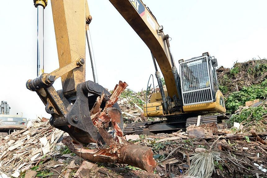 At an EcoWise Holdings recycling plant, tree trunks and large branches are first broken up with an excavator (above), before being put through the crusher. -- ST PHOTOS: ASHLEIGH SIM, NG SOR LUAN