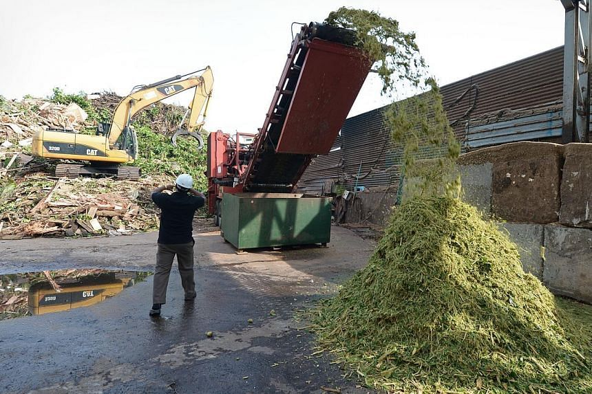 Christmas trees (main picture) at Far East Flora. At an EcoWise Holdings recycling plant, tree trunks and large branches are first broken up with an excavator (above left), before being put through the crusher (above right).