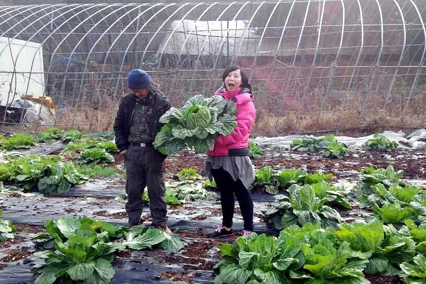 Yen, a Singaporean, spending the weekend on the farm of her husband's friend in Gimpo, South Korea. No bigger than half the size of Singapore, Gimpo in the northern part of South Korea is a city of farms and factories where weather-beaten men have li