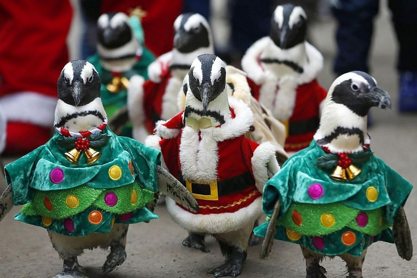 Visitors look at penguins wearing Santa Claus (in red) and Christmas tree (in green) costumes during a promotional event for Christmas at an amusement park in Yongin, south of Seoul on Dec 18, 2013. -- FILE PHOTO: REUTERS
