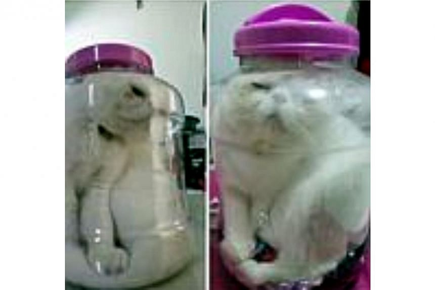 Taiwan student charged after putting cat in jar, Asia News