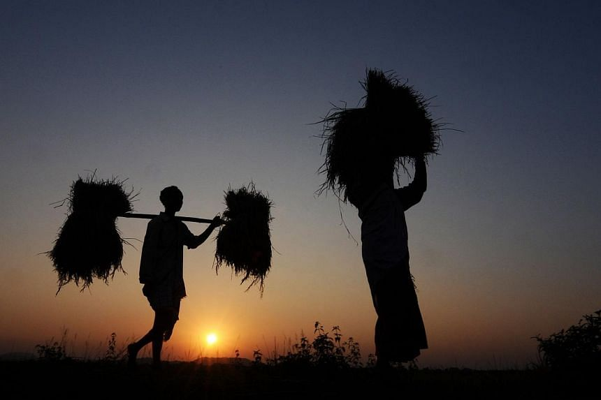 Indian farmer Lala Rabha (left), and his wife carry rice harvest from the fields at sunset in the village of Daranggiri, some 100kms west of Guwahati, on Nov 23, 2012. A leading politician in northeast India gave fresh momentum on Jan 2, 20