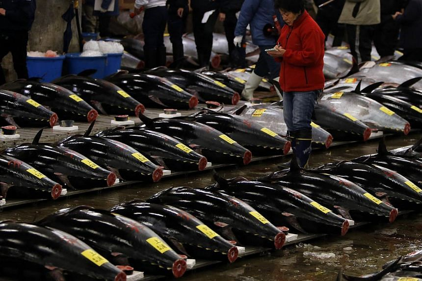 Wholesalers check the quality of fresh tunas displayed at the Tsukiji market before the New Year's auction in Tokyo on Jan 5, 2014. A giant bluefin tuna sold at a Japanese auction on Sunday for less than five per cent of the record-breaking sum paid