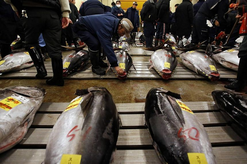 Wholesalers check the quality of fresh tunas displayed at the Tsukiji market before the New Year's auction in Tokyo on Jan 5, 2014. -- PHOTO: REUTERS