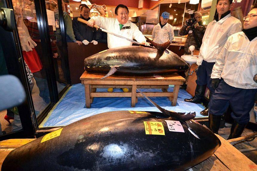President of sushi restaurant chain Sushi-Zanmai, Kiyoshi Kimura, displays a 230kg bluefin tuna (right) at his main restaurant near Tokyo's Tsukiji fish market on Jan 5, 2014, as another bluefin tuna at 168kg is displayed (bottom). -- PHOTO: AFP