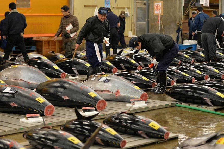 Fishmongers inspect bluefin tunas before the first trading of the new year at Tokyo's Tsukiji fish market on Jan 5, 2014. -- PHOTO: AFP