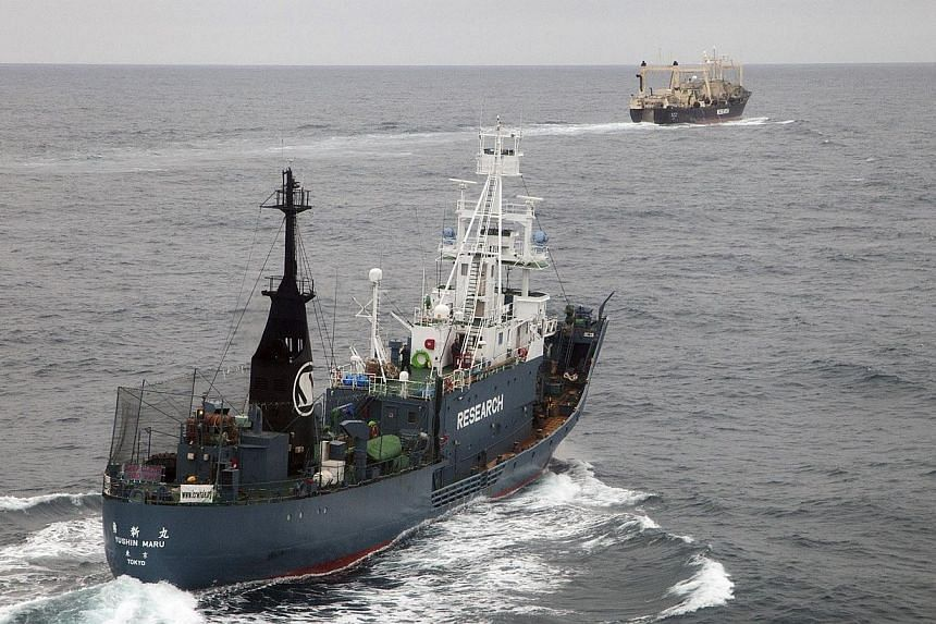 Japanese whaling ships Yushin Maru (left) and Nisshin Maru are pictured as they leave an internationally recognised whale sanctuary at 60 degrees south latitude, in this picture taken by helicopter by the Sea Shepherd Australia Antarctic whale defenc