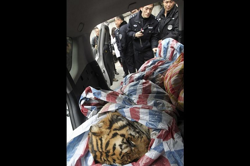 A dead tiger is found during a police action in Wenzhou, Zhejiang province, on Jan 8, 2014.-- PHOTO: REUTERS