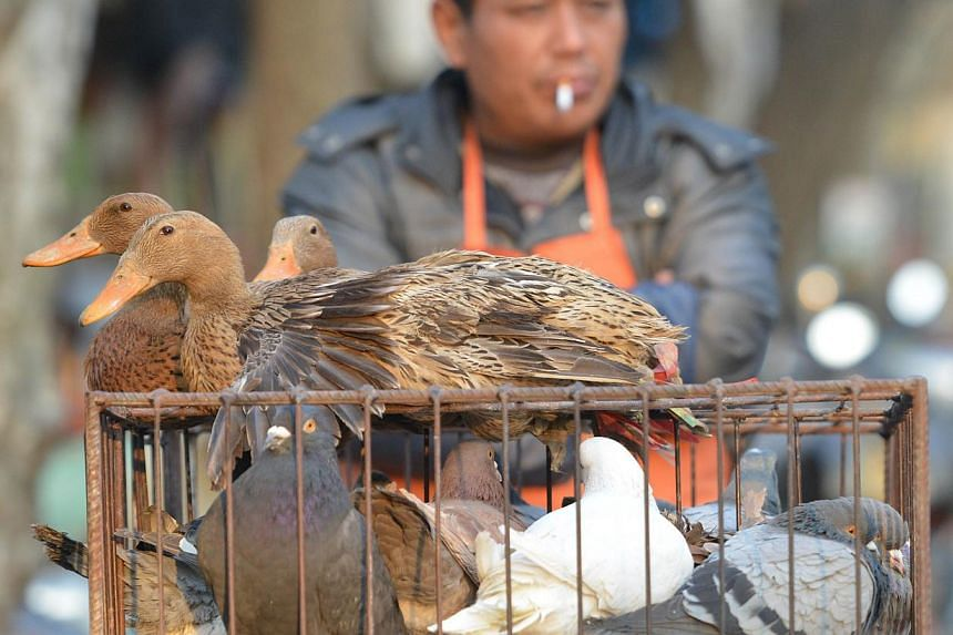 A vendor selling live poultry on a street in Shanghai, on Jan 8, 2014. A new human case of H7N9 bird flu has been reported in east China's Jiangsu province. -- FILE PHOTO: AFP