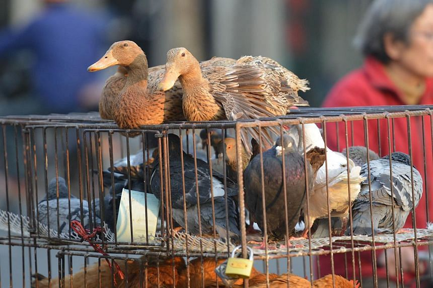 Live poultry for sale on a street in Shanghai on Jan 6, 2014. China has reported new deaths from the H7N9 bird flu virus, state media said, as the disease returns following an outbreak last year. -- FILE PHOTO: AFP