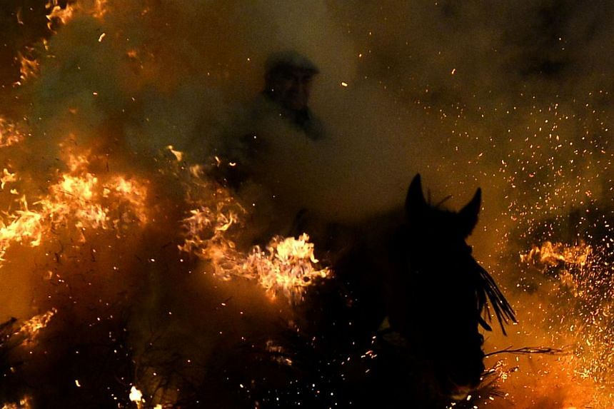 A horse and rider pass through a burning pyre in the central Spanish village of San Bartolome de Pinares on Jan 16, 2014 during celebrations for the feast of Saint Anthony, patron saint of animals. -- PHOTO: AFP