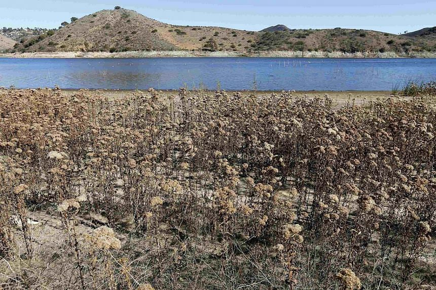 The receding water line of Lake Hodges is seen in San Diego County on Jan 17, 2014. California Governor Jerry Brown declared a drought emergency on Friday, a move that will allow the parched state to seek federal aid as it grapples with what could tu